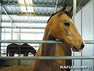 シェイ・センターには現在、20頭のセラピー馬が飼育されている
