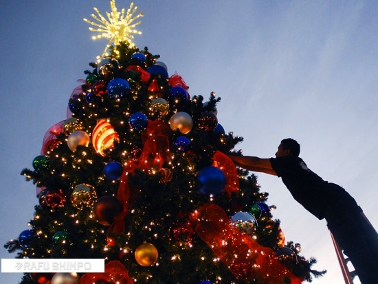 A mighty evergreen Christmas tree has been put up in Little Tokyo's Japanese Village Plaza. (MIKEY HIRANO CULROSS/Rafu Shimpo)