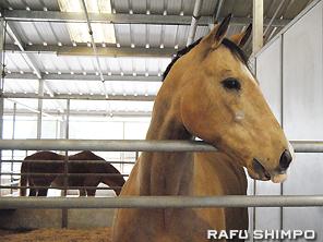 The Shea Center has horses.