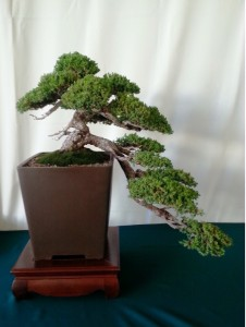 bonsai (bowers)
