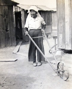 Asa Muranaka wields a cultivator in Clearwater, a community east of Compton. According to Tomio, it was his mother who was the driving force behind the family's farm and their decision to grow chrysanthemums.