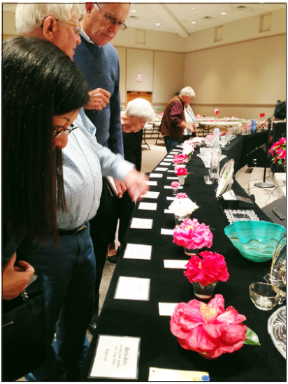 Attendees view camellias at the 76th annual Camellia Show held in Pensacola, Fla. (RYOKO OHNISHI/Rafu Shimpo)