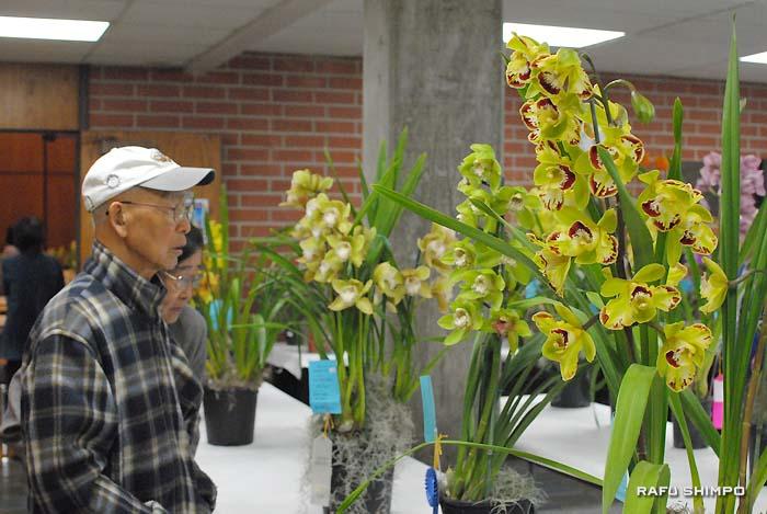 蘭の香りが漂う中、会員が手塩にかけて育てた色とりどりの蘭を堪能する岡テッドさんと友人のエミコさん