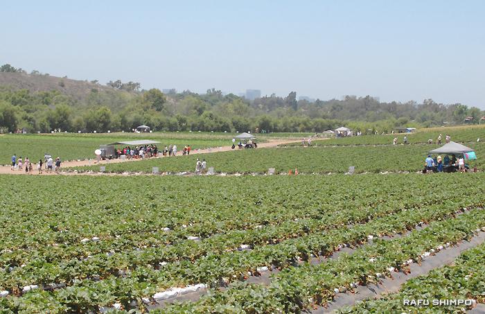 広大な田中農園に設置されたテントを回る参加者