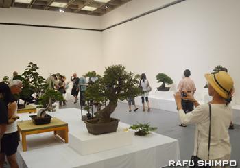 大勢の入場者で賑わった盆栽展の会場
