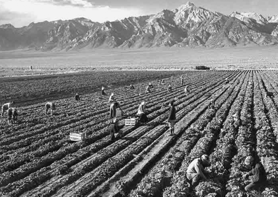 "Ansel Adams, ""Potato Field,"" 1943. Gelatin silver print (printed 1984). Private collection; courtesy of Photographic Traveling Exhibitions."