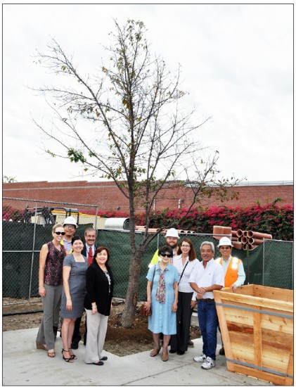 Metro officials and Little Tokyo community members gather at the last surviving cherry tree on Oct. 14. From left: Susan Santoro, Johnny Truong, Olga Arroyo, Gary Baker, Marice Quezada, Kay Kamei, Mat Antonelli, Jeanmarie Hance, Brian Kito and John Yen.