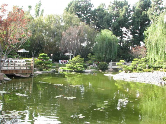 The Earl Burns Miller Japanese Garden provided a tranquil setting for the event.