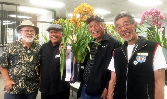 "Members who were able to have beautiful blooms in spite of the drought were awarded. From left: Steven Schlegel (Best Miniature/Novelty Cymbidium-Kiwi Connection ""Jack Thomas""), Jose Avila (Best Pendulous Cymbidium-Bob Norton ""Green Fire""), Light Matsumoto (Grand Champion-Ernest Hetherington x Don Hosfeldt), and James Ly (Best Standard Cymbidium-Plum Passion ""Etsuko"")."