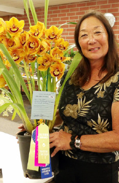 "The daughter of the late Frank and Keiko Kageyama, Sandra Comer, received Best Cultural Cymbidium Award for her Earnest Hetherington x Don Hosfeldt ""Geyser Land."""