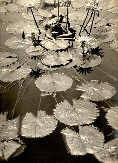 "Asahachi Kono, ""Pond Fantasy,"" c. 1930. Gelatin silver print. Collection of the Kono family."