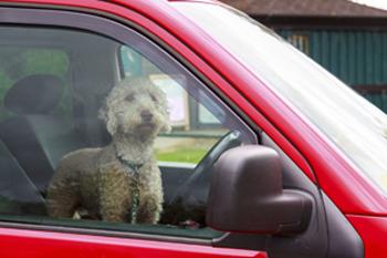 車内に取り残され飼い主を待つペット