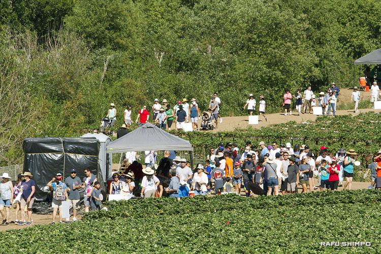 東日本大震災の被災農家支援:農園歩いて「希望を収穫」