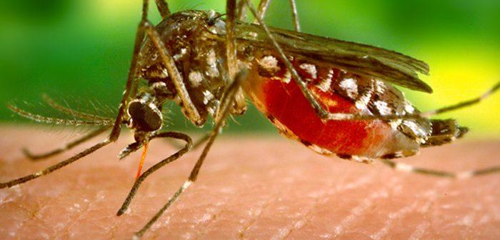 ジカ熱、LA郡で感染者:性的接触から感染か