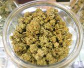 嗜好用大麻の販売が解禁:カリフォルニア州で1日から