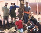 日米文化会館が土の入れ替え:グレープフルーツの木「サニー」